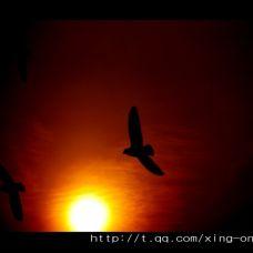 夕阳西下笼中之鸟