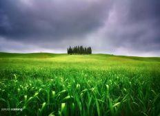 碧草如茵的农园