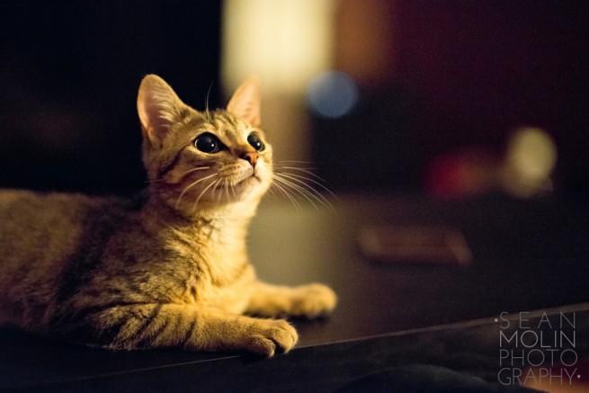 照片剖析课堂-夜里的猫猫
